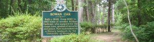 web header image for William Faulkner and Rowan Oak